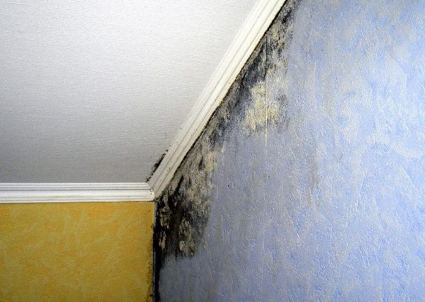 Плесень на стенах не только портит вид, но и наносит вред здоровью