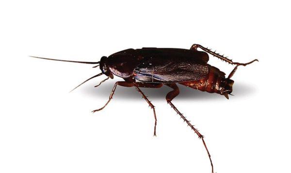 Тараканы не приходят в дом по одному