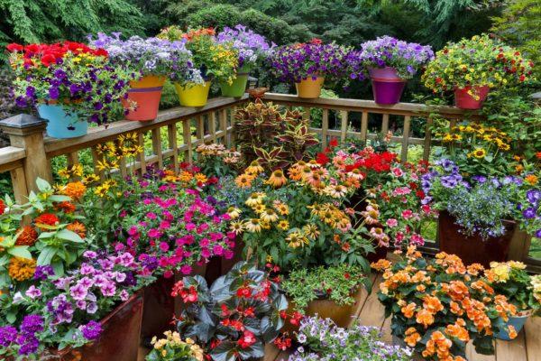 Сад в контейнерах