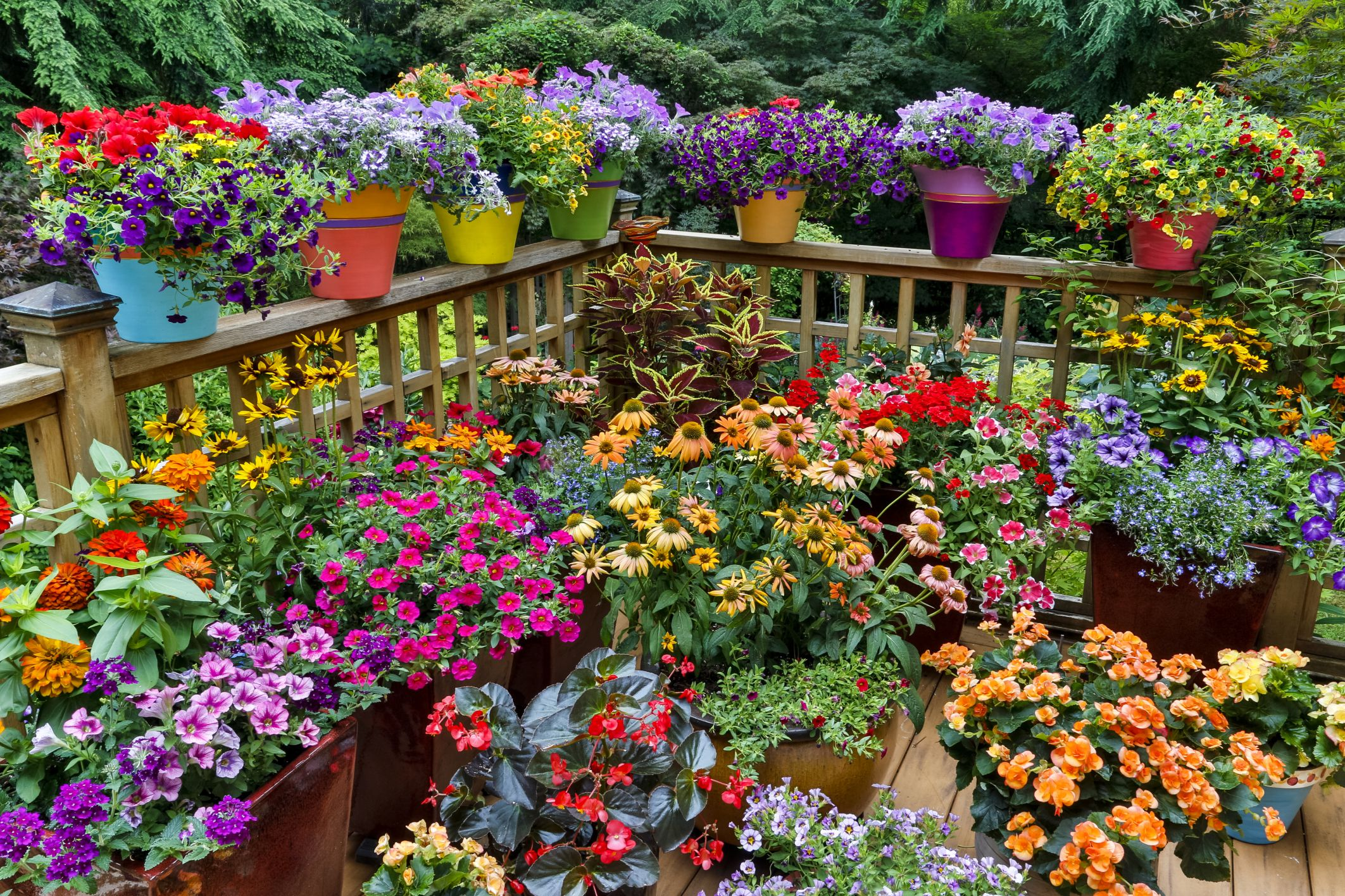 Цветы картинки для огорода