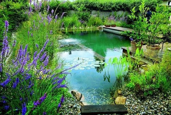 Природный бассейн своими руками