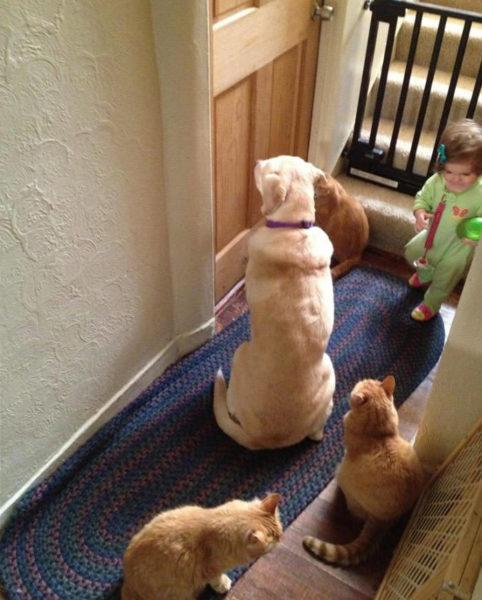 Иногда под дверями собирается своеобразная очередь.