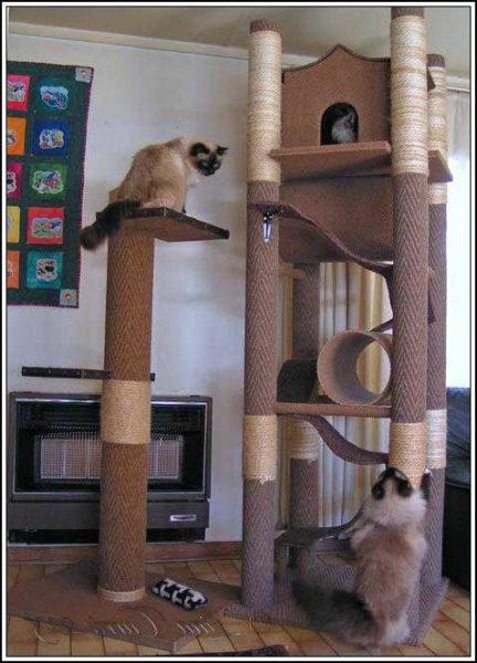 Целая квартира для кошек.