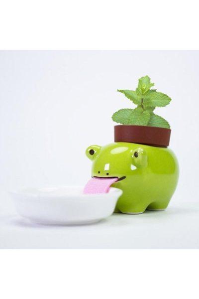 Горшок «лягушка на водопое» убережет от засухи и перелива ваш цветочек.